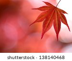 A Red Maple Leaf In Forest