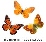 Stock photo orange tropical butterflies tropical insects isolated on white background design pattern 1381418003