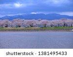 sakura flower bloom in nakoya... | Shutterstock . vector #1381495433