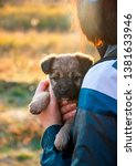 Stock photo  cute puppy girl with a puppy baby and puppy sleeping puppy 1381633946