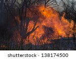 Fire On Dry Grass  Trees And...
