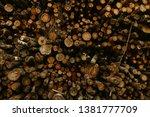 felled trees stacked.... | Shutterstock . vector #1381777709