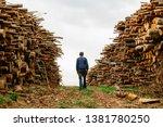 worker chooses a log. felled... | Shutterstock . vector #1381780250
