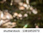 Venusta orchard spider (Leucauge venusta) on its web