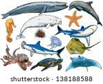 marine  sea  aquatic animals of ...