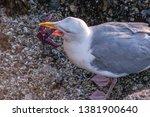 seagull flight beach ast close... | Shutterstock . vector #1381900640