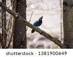 bird birdwatching wild wildlife ... | Shutterstock . vector #1381900649