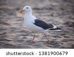 seagull flight beach ast close... | Shutterstock . vector #1381900679
