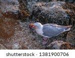 seagull flight beach ast close... | Shutterstock . vector #1381900706