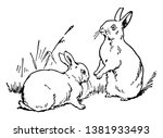 Stock vector rabbits are small mammals male rabbit is called buck female rabbit is a doe young rabbit is 1381933493