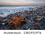 driftwood on a stony beach of... | Shutterstock . vector #1381951976