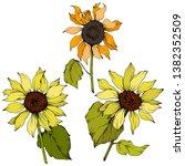 vector sunflower floral... | Shutterstock .eps vector #1382352509