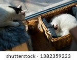 Three Cats Sleep Near The Window