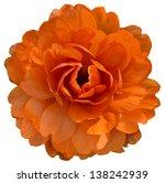 Stock photo orange isolaed flower 138242939