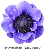 Violet Isolated Flower