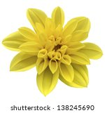 yellow isolated flower | Shutterstock . vector #138245690