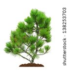 Green Pine Tree  Isolated Over...