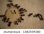 pavement ants on kitchen... | Shutterstock . vector #1382539280