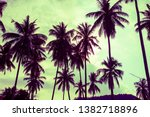 beautiful coconut palm tree... | Shutterstock . vector #1382718896
