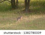 Stock photo wild hare running on a field 1382780339