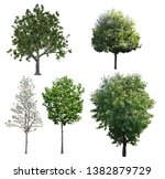tree collection composition... | Shutterstock . vector #1382879729