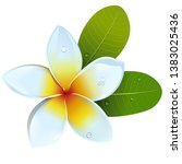 vector frangipani flower...   Shutterstock .eps vector #1383025436