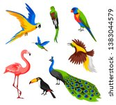 Stock vector set of tropical exotic birds wild fauna of jungle and rainforest 1383044579