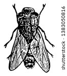 sheep bot fly is a fly in the... | Shutterstock .eps vector #1383050816