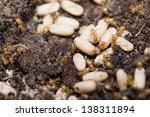 yellow ants inside anthill...   Shutterstock . vector #138311894