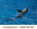 Trained dolphin in the aquarium, dolphinariums. show with dolphins. dolphin playing with a ball in the pool