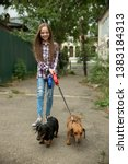 Stock photo little girl walks the dogs in the city child playing with her dachshund dogs pets care dog 1383184313