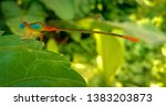 Stock photo blue eyed dragonfly found in india in a tropical rain forest and the dragon fly has transparent 1383203873