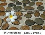 white frangipani flower or... | Shutterstock . vector #1383219863