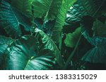 large foliage of tropical leaf... | Shutterstock . vector #1383315029