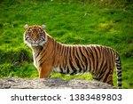 A tiger poses for the camera at the Point Defiance Zoo in Washington.