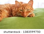 Stock photo red beautiful cat lies with opened eyes on a green sofa and looks in front of a bright window 1383599750