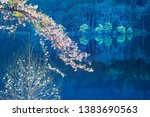 cherry blossoms blooming on the ... | Shutterstock . vector #1383690563