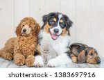 Stock photo group of puppies of different breeds with kitten on floor at home 1383697916
