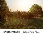 unkempt garden scene  3d... | Shutterstock . vector #1383739763