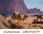 camels or dromedary in the... | Shutterstock . vector #1383752579