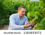 portrait of male winemaker... | Shutterstock . vector #1383853073
