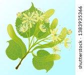 vector illustration of a linden ... | Shutterstock .eps vector #1383935366