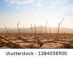 Dead Trees On Drought And...