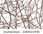 thorny branches with thorns. a...   Shutterstock . vector #1384421930