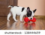 Stock photo sweet eight week old french bulldog puppy 138444659