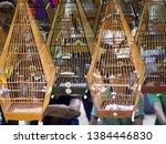 a bird singing contest event in ...   Shutterstock . vector #1384446830