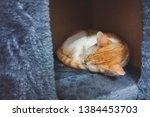 Stock photo sleeping kitten little orange fluffy kitten sleeping in the cat house 1384453703