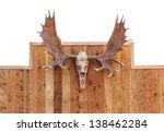 Skull Moose Front View  Hung O...