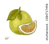 pomelo colored botanical... | Shutterstock .eps vector #1384717496