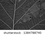 close up texture of teak leaves.... | Shutterstock . vector #1384788740